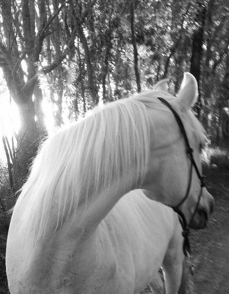 Alert healthy horses