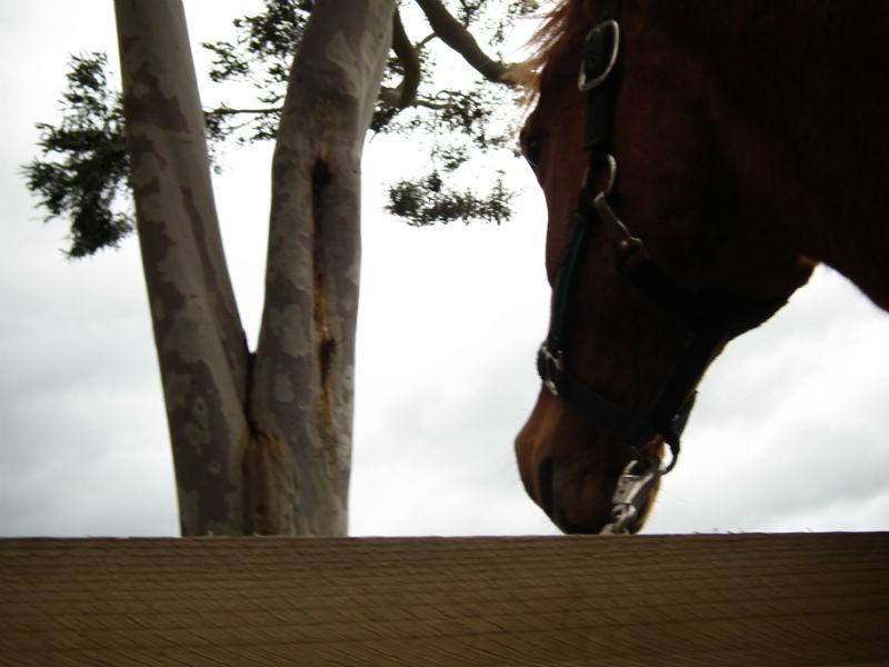 Acatt Equine Movement Clinic