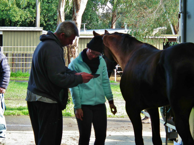 Equine Sports Therapy