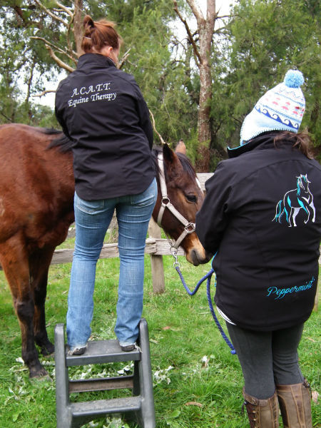 Discuss horse care with owners
