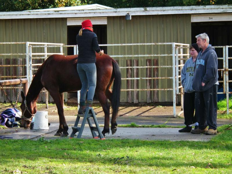 Assess horse post massage