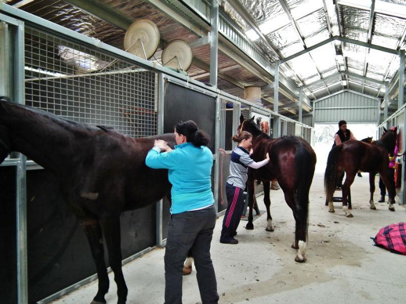 Horse movement assessment