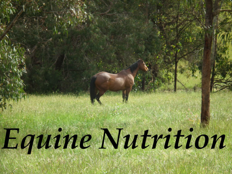Horse feeds and nutrition