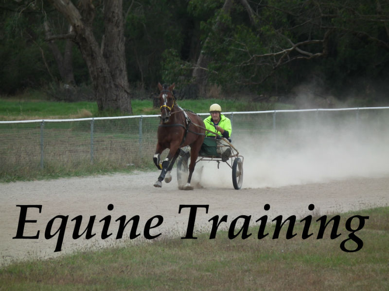 Training and selection of sports horses