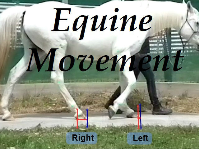 Equine slow motion video and computer based gait analysis