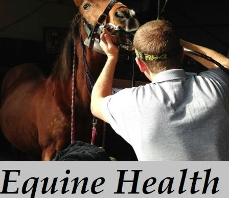 Equine natural health care