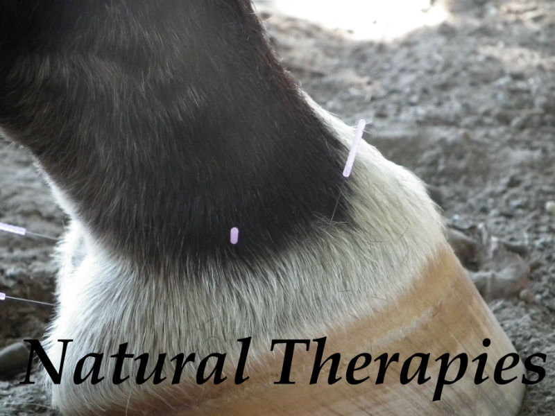 Natural Therapies for horses