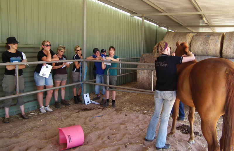 Equine Gait Analysis Course