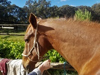 Horse Massage Clinic