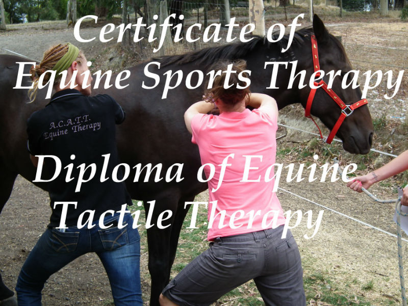 Horse Massage Course, Equine Sports Massage Therapy, Equine Advanced Massage, Remedial Therapy, manipulation diploma