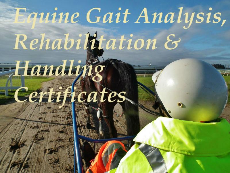 Equine rehabiliation Certificate, Equine Biomechanics professional qualification