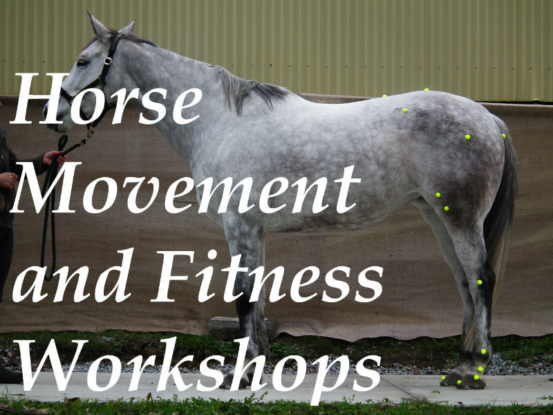 Equine training and biomechanics course and workshop
