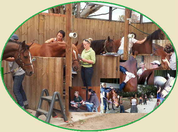 ACATT Professional Equine Therapy College, horse massage course, equine sports massage therapy certificate, equine nutrition certificate, equine biomechanics qualification (gait analysis), Horse health and nautral care certificates