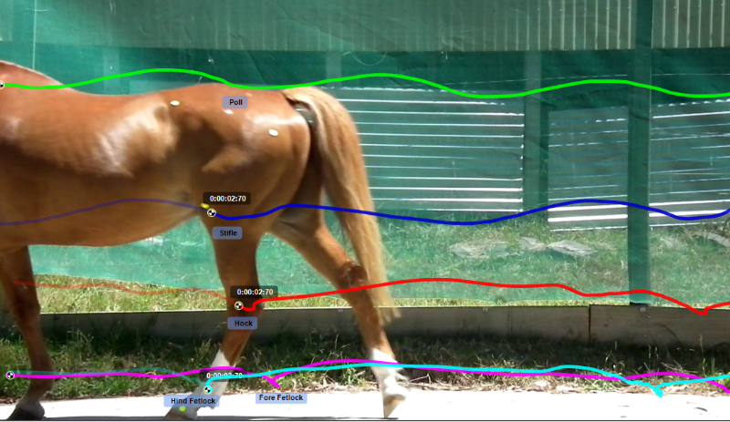 Tracking Horse Analysis
