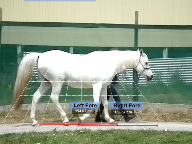 Slow Motion Equine Gait Analysis