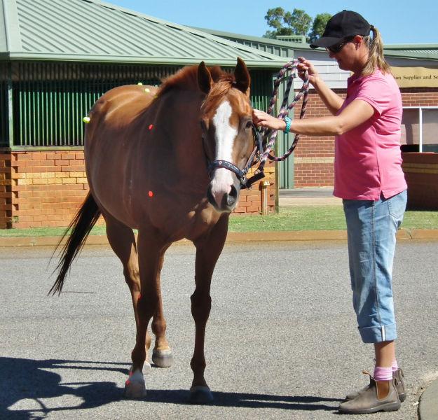 Handling Horses