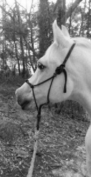 Gentle horse handling