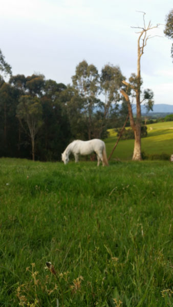 Healthy Horse Feeding
