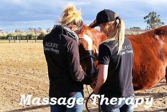 Horse massage, sports therapy and stretching