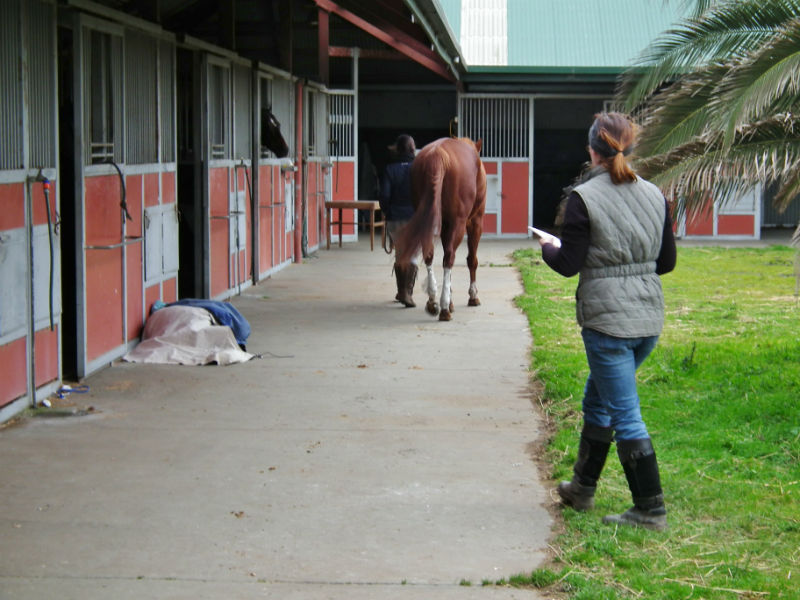 Assessing Horse Movement