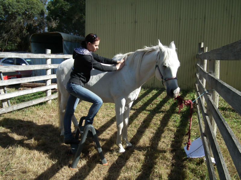 Horse Massage Wither