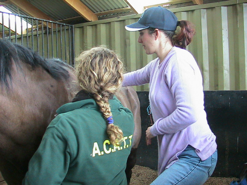 Equine Sports Massage Instruction