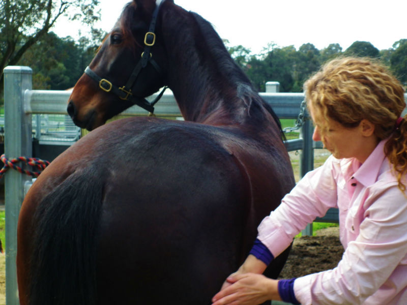Horse Massage Deep Tissue