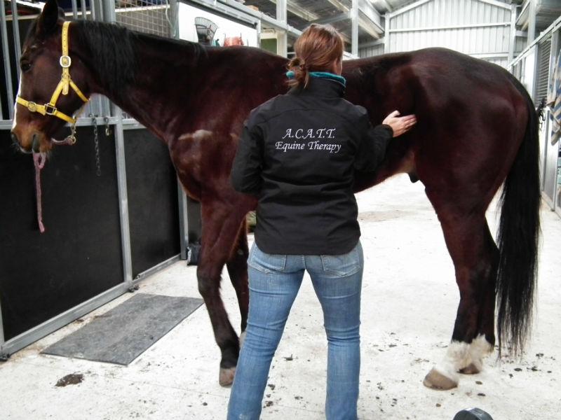 Equine manipulation Myofascial Release