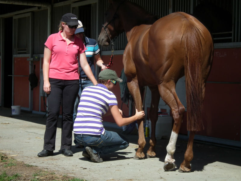 Horse Sports Therapy course student support