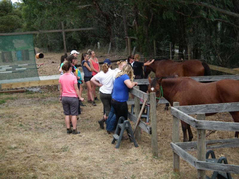 Horse Health education