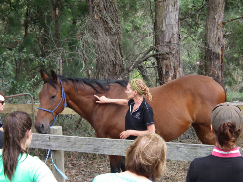 Equine Sports Therapy and Massage