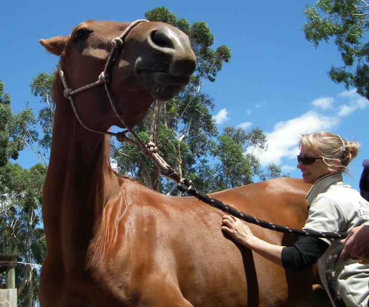 Professional Horse Care