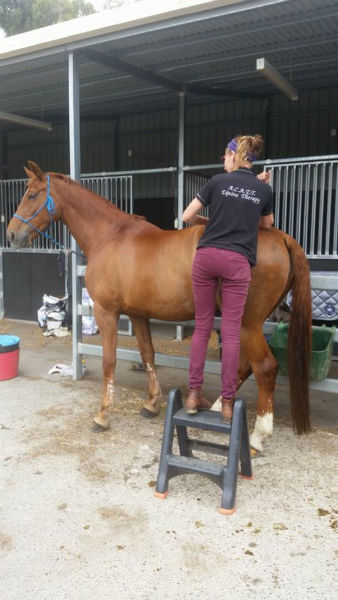 Services in Horse training