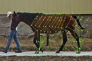 improve horse movement