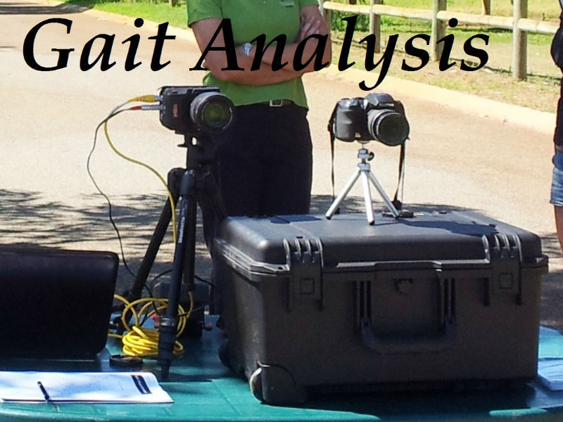 Equine Gait Analysis, slow Motion Video