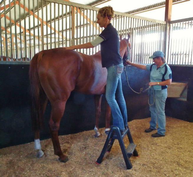 Horse Masseur