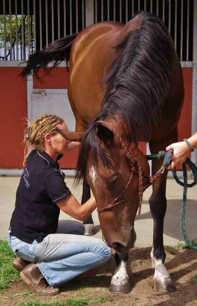 Equine Sports Massage Therapist