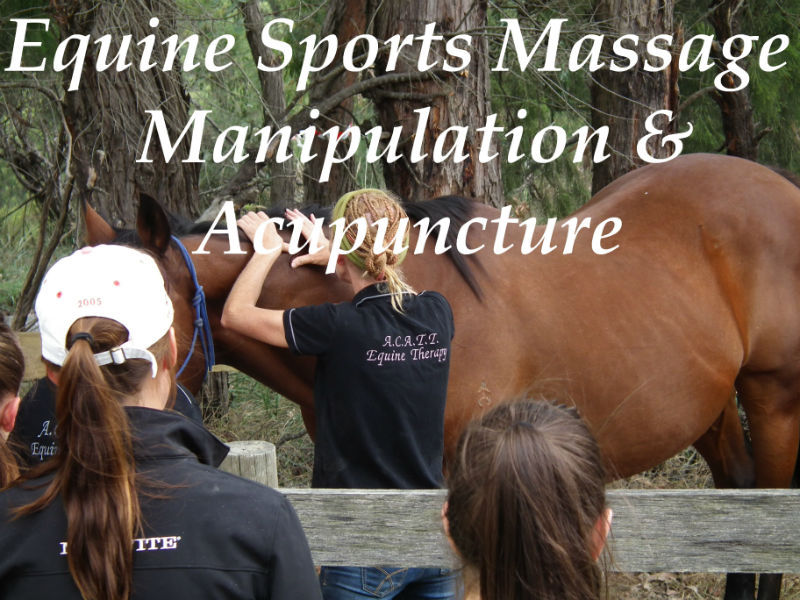 Horse Massage, Equine Sports therapy