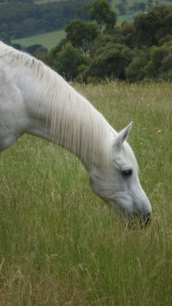 good horse nutrition