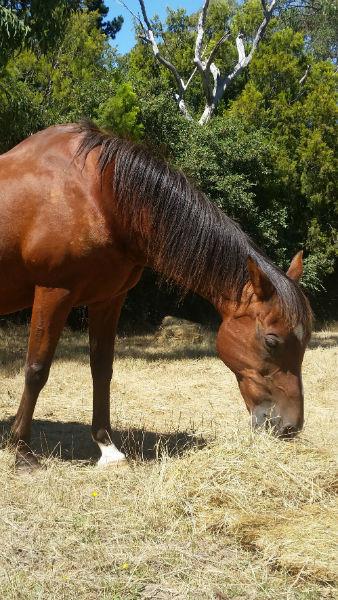natural horse feeding