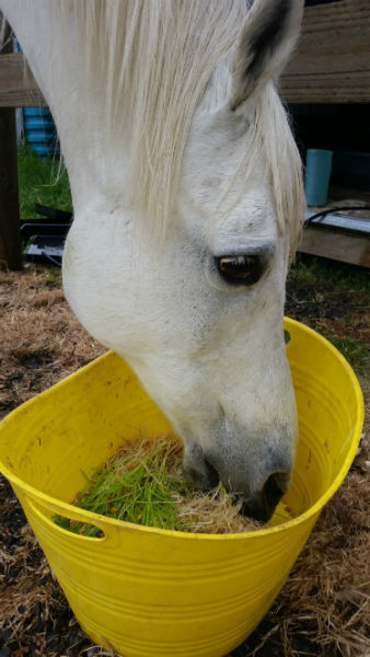 Hydroponic barley grass for horses