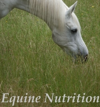 Horse Feed assessment
