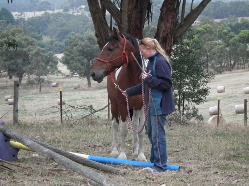 Equine rehabilitation - ground work