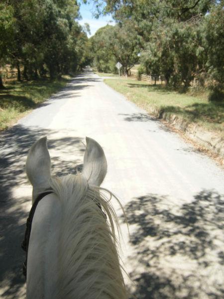 Horse Rehabilitation - long slow distance