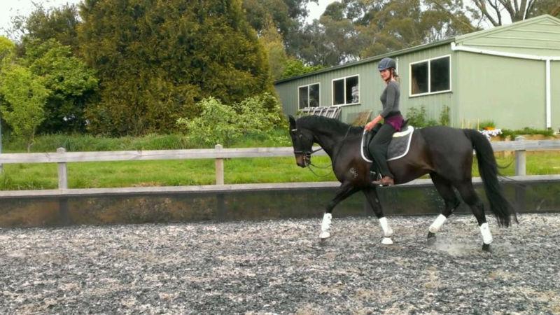 enhance horse movement