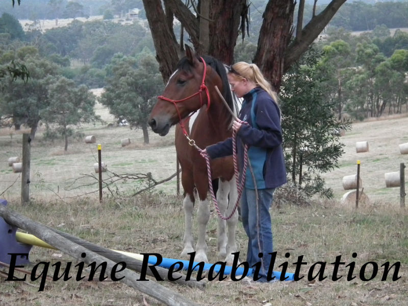 Equine Rehabilitation post injury