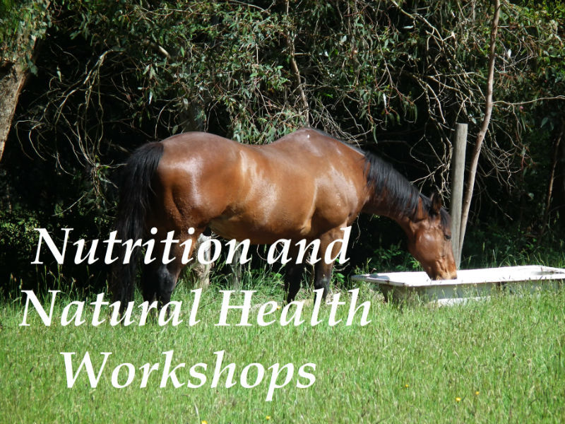 Horse Nutrition and Equine Health courses and workshops