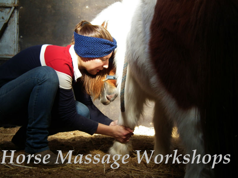 Horse Massage Courses and workshops
