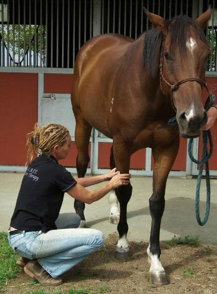 Equine Gait analysis clinic