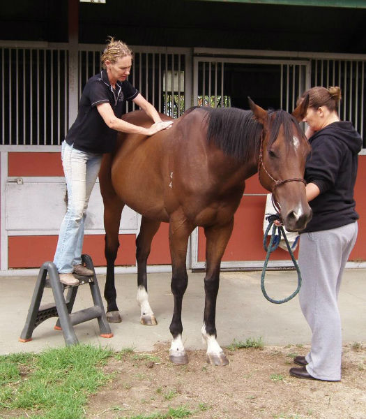 Horse Health , natural care